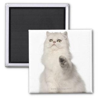 Sentada del gato persa imán cuadrado