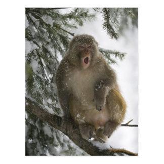Sentada del mono de Macaque del macaco de la India Postal