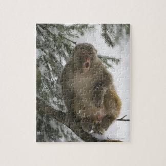 Sentada del mono de Macaque del macaco de la India Puzzles