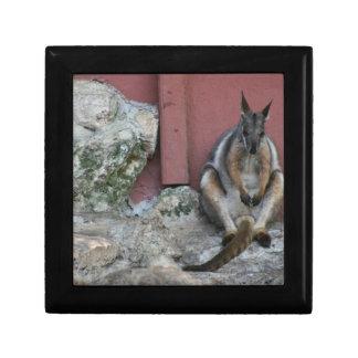 sentada marsupial contra la pared por la roca caja de regalo