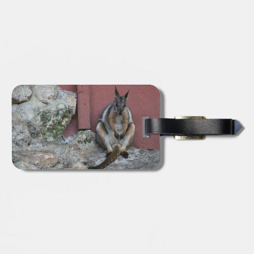 sentada marsupial contra la pared por la roca etiquetas de maletas