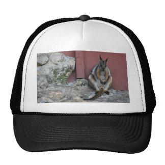 sentada marsupial contra la pared por la roca gorras