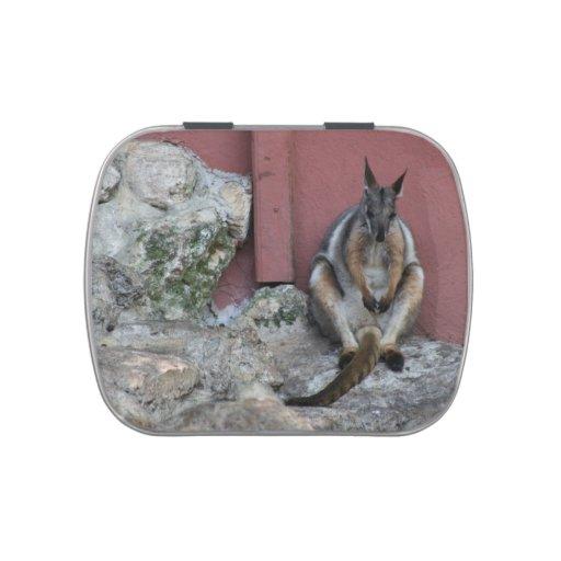 sentada marsupial contra la pared por la roca jarrones de dulces