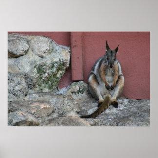 sentada marsupial contra la pared por la roca posters
