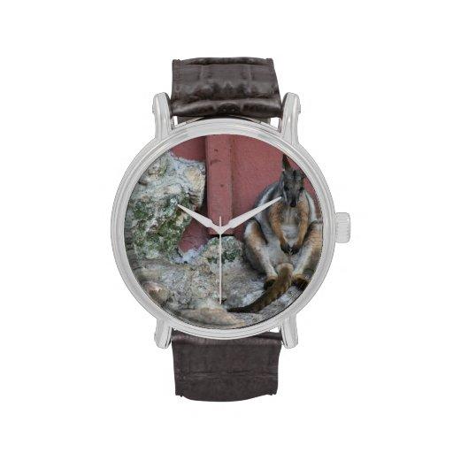 sentada marsupial contra la pared por la roca reloj de mano