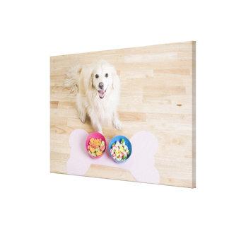 sentada mestiza delante de dos cuencos con el perr impresiones en lona estiradas