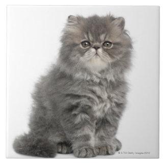 Sentada persa del gatito (2 meses) azulejo cuadrado grande