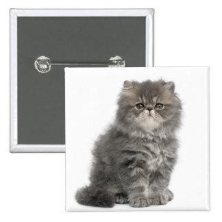 Sentada persa del gatito (2 meses) pin cuadrado