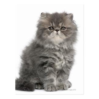 Sentada persa del gatito (2 meses) postal