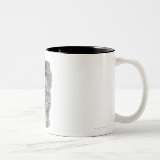 Sentada persa del gatito (2 meses) taza
