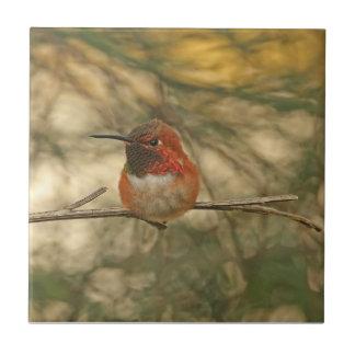 Sentada rufa del colibrí azulejo cuadrado pequeño