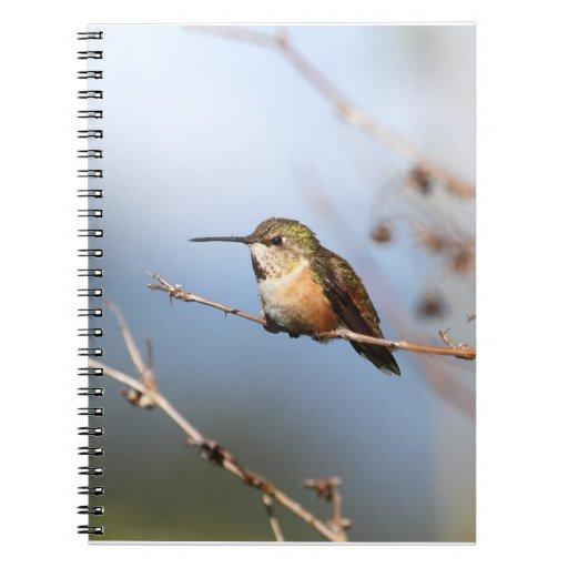 Sentada rufa del colibrí libros de apuntes
