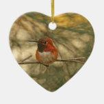 Sentada rufa del colibrí ornato