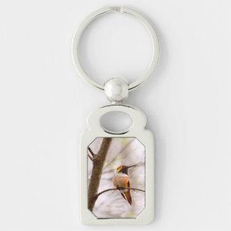 Sentada rufa del colibrí llaveros