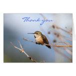 Sentada rufa del colibrí tarjeta de felicitación