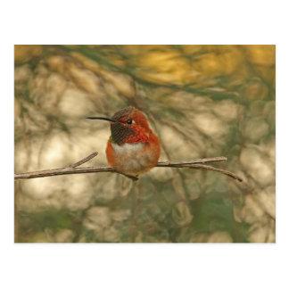 Sentada rufa del colibrí tarjeta postal