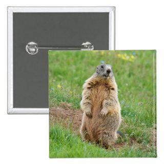 Sentinel marmot pins