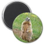Sentinel marmot fridge magnets