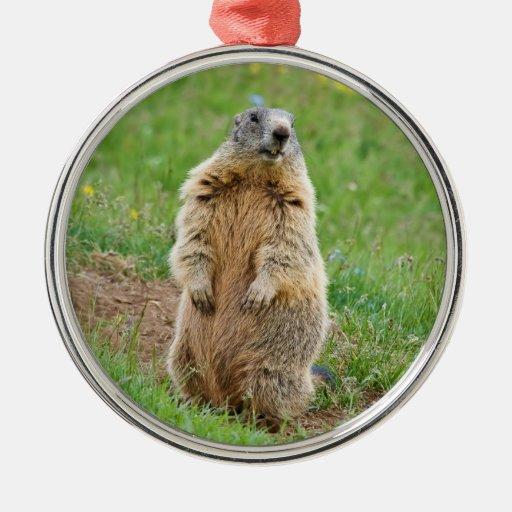 Sentinel marmot ornaments