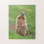 Sentinel marmot puzzles