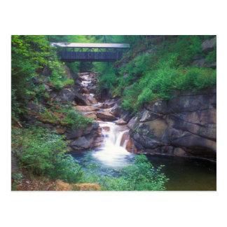 Sentinel Pine Bridge Flume Gorge Postcard