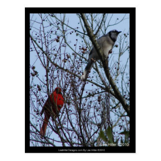 Sentinels Blue Jay and Cardinal by Lee Hiller Postcard