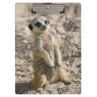 Sentry-in-Training Clipboard