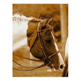 Sephia Horse Mosaics Postcard