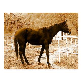 Sephia Pop Art Horse Postcard
