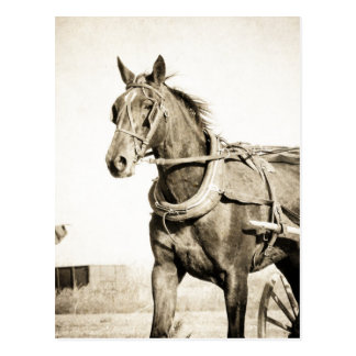 Sepia Amish Horse And Buggy Postcard