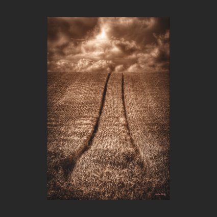 Sepia Been and Gone - tracks in a wheat field Stretched Canvas Print