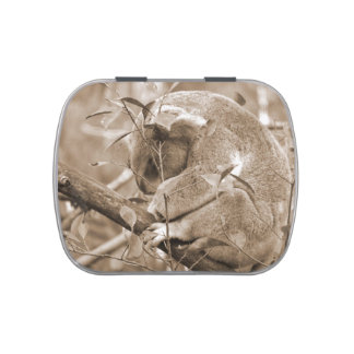 sepia c abajo el dormir de la cabeza de la koala frascos de caramelos