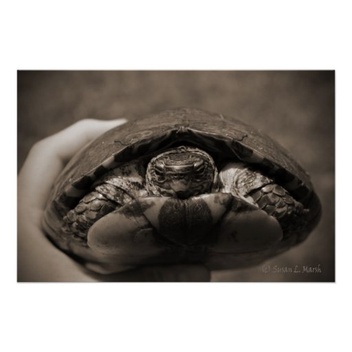 Sepia centrada de madera adornada de la tortuga a  impresiones