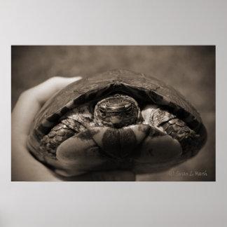 Sepia centrada de madera adornada de la tortuga a  póster