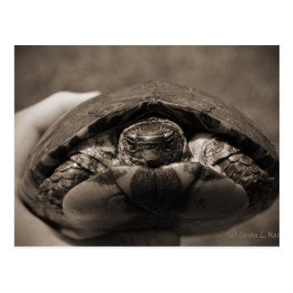Sepia centrada de madera adornada de la tortuga a tarjeta postal