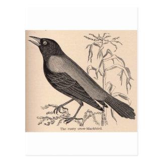 Sepia Crow Postcard