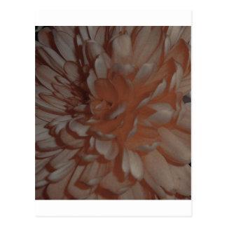 sepia crysanthamum postcard
