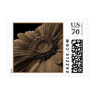 sepia daisey postage stamp