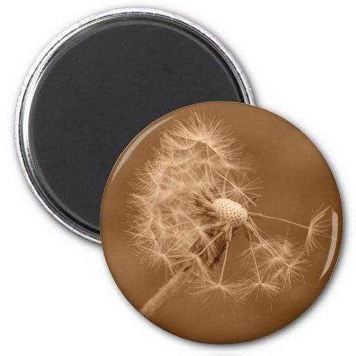 Sepia Dandelion Magnet