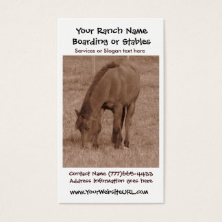 Sepia Grazing Horse Photograph Business Card
