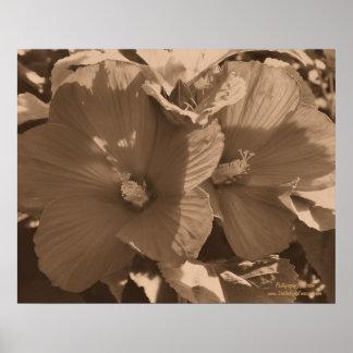Sepia Hibiscus Pair Floral Poster Print