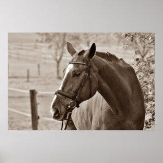 Sepia Horse - Animal Photography Artwork Poster