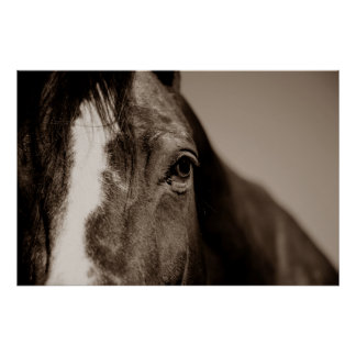 Sepia Horse Photography Artwork Poster