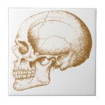 "Sepia Human Skull Ceramic Tile<br><div class=""desc"">Human skull side view,  in sepia.</div>"