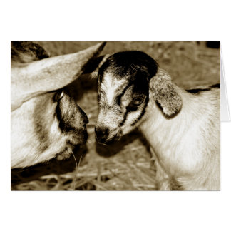 Sepia Image of Mom and Baby Alpine Goats Card