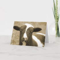 Sepia Jacob Lamb Birthday Card