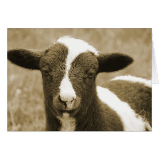 Sepia Jacob Lamb Birthday Card