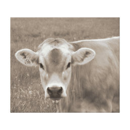 Sepia Jersey Cow Portrait Canvas Print