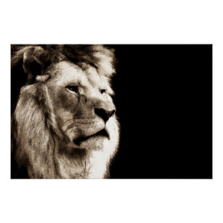 Sepia Lion Animal Photography Artwork Poster