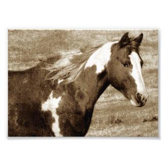 Sepia llamativa de la yegua de Tobinano Impresiones Fotograficas